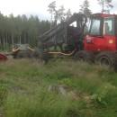 metsä-äes-UOT-3000